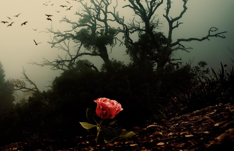 နှင်းဆီရိုင်းတောကို ဖြတ်ကျော်ခြင်း (ဇာတ်သိမ်းပိုင်း)